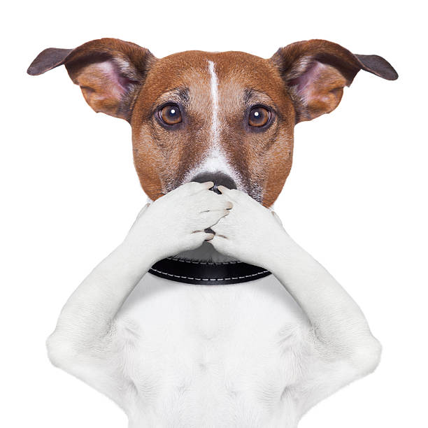 covering mouth dog covering the mouth dog with paws hear no evil stock pictures, royalty-free photos & images
