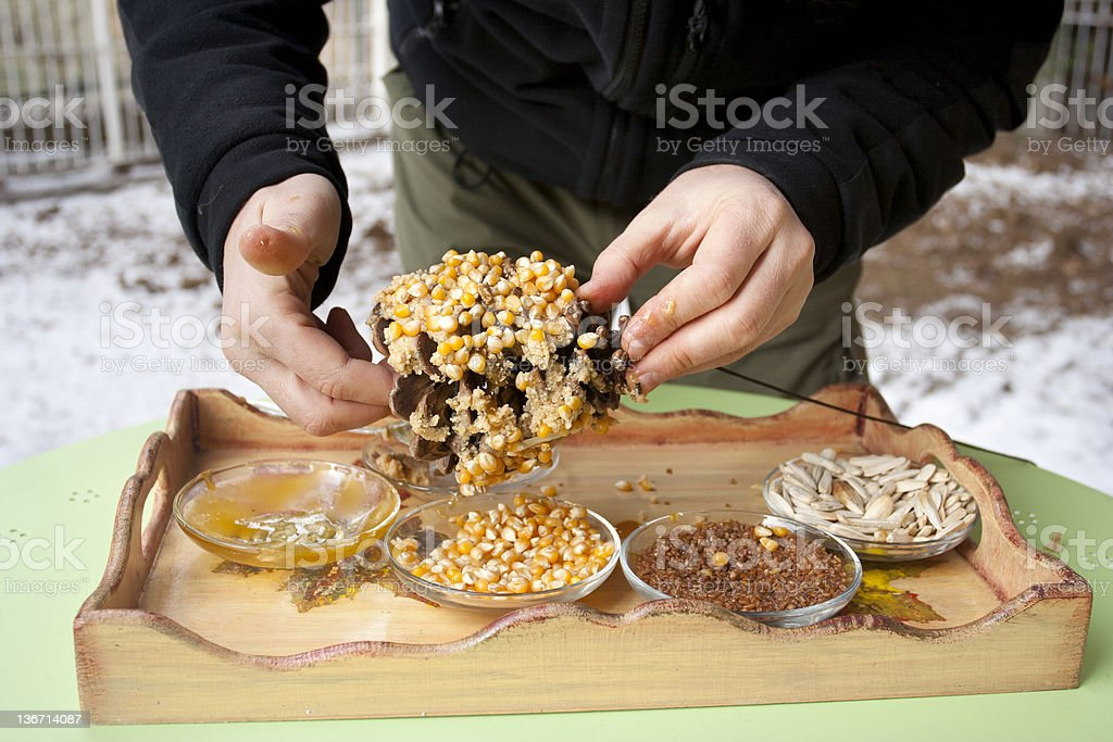 covering pine cone with seeds stock photo