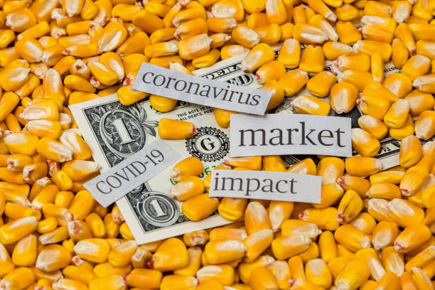 Covid-19 coronavirus news headlines with corn kernels and United States of America one dollar bill. Concept of worldwide pandemic impact on agriculture commodity market price and farming economy stock photo