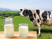 Cow and milk from the ranch