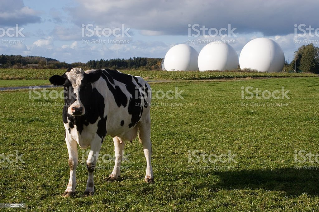 Cow and radomes stock photo