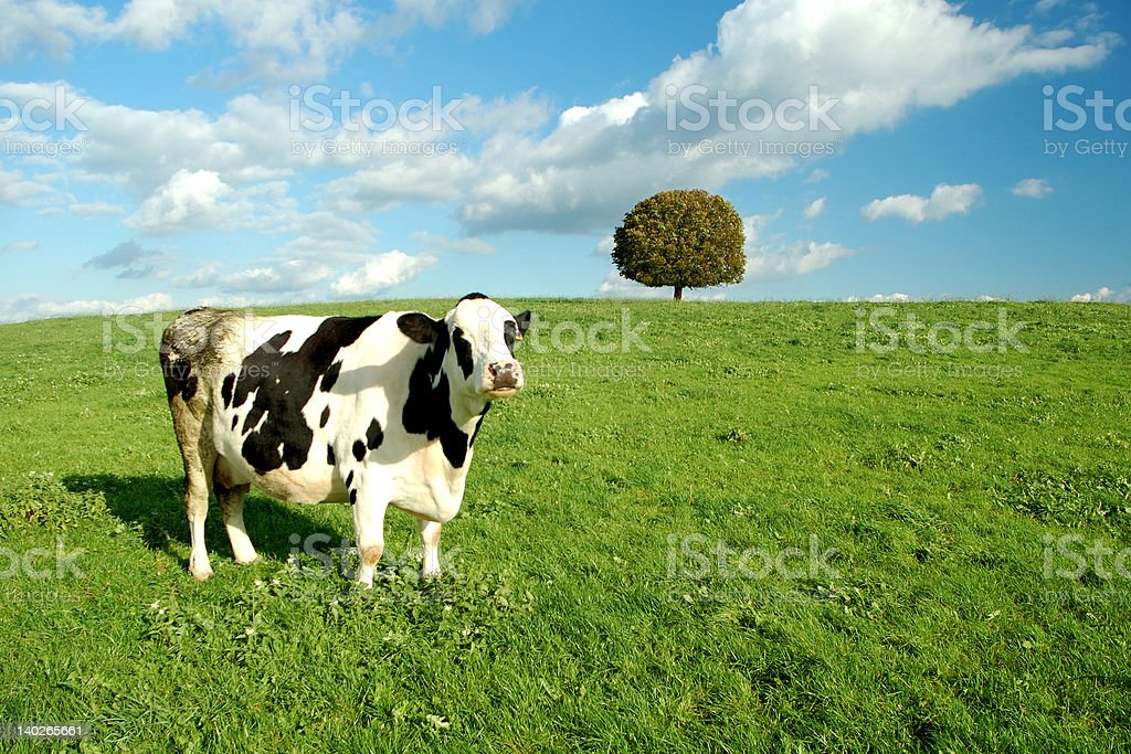 cow and tree royalty-free stock photo
