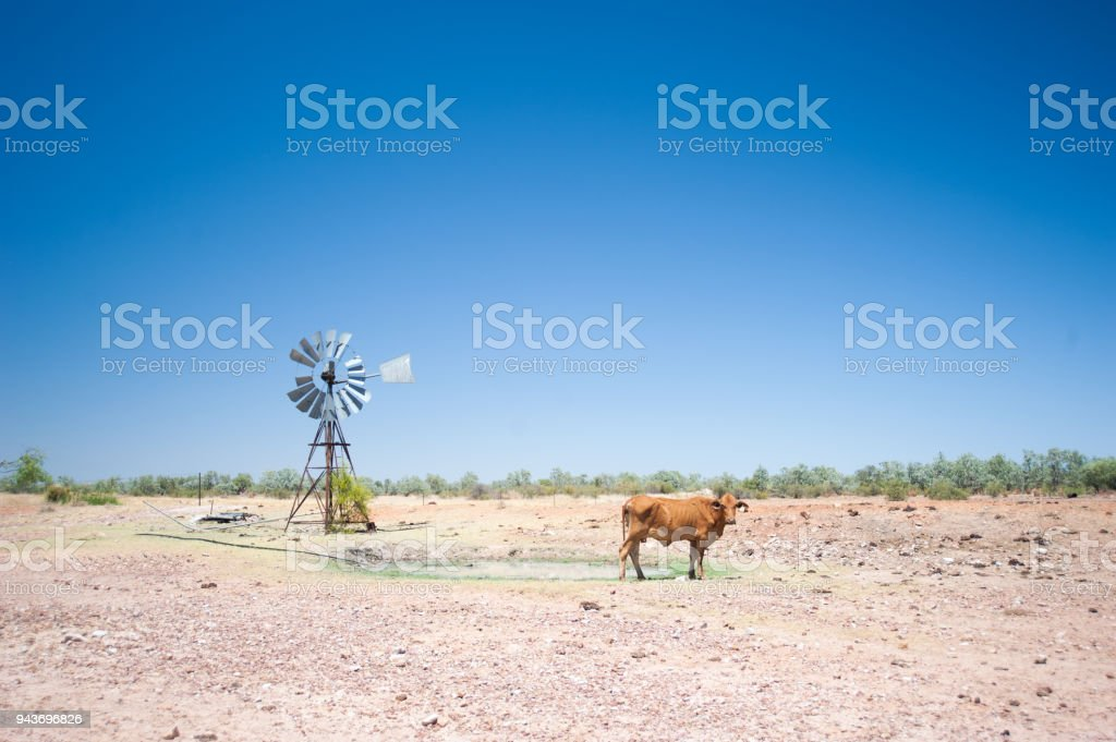 A cow and windmill in outback Australia. stock photo