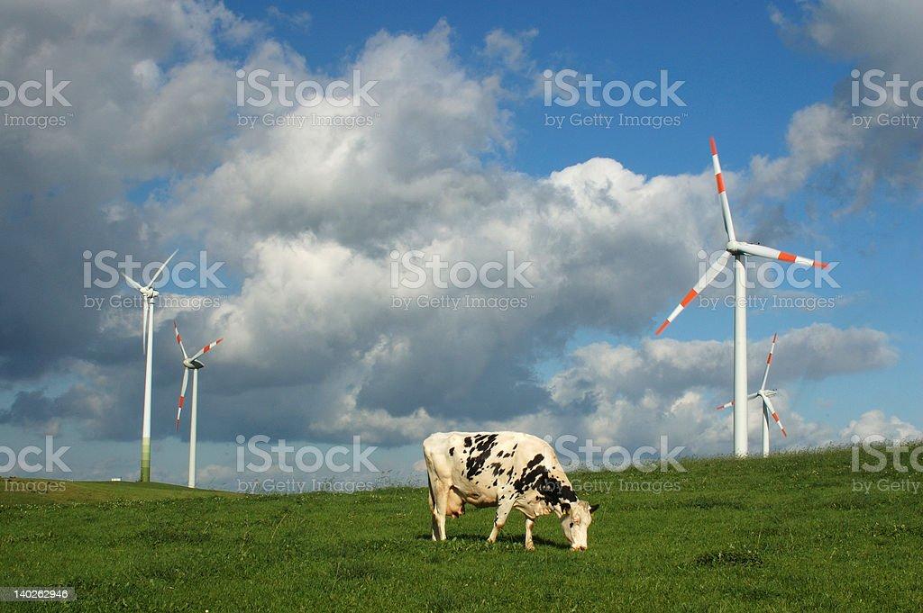Kuh und Windmühle – Foto