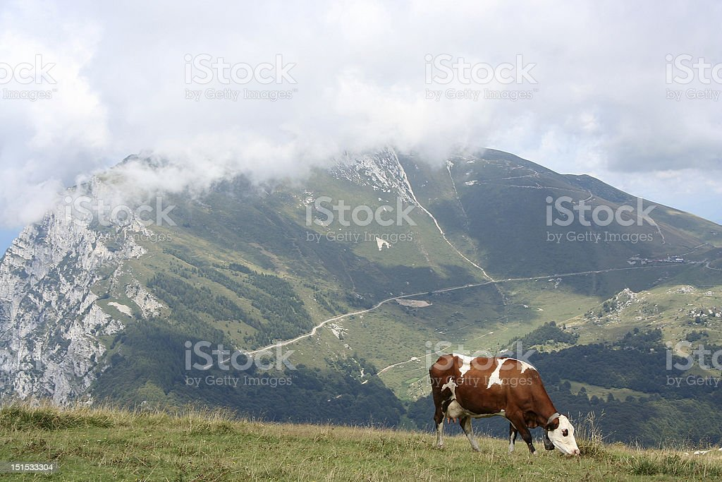 Cow at an alp stock photo