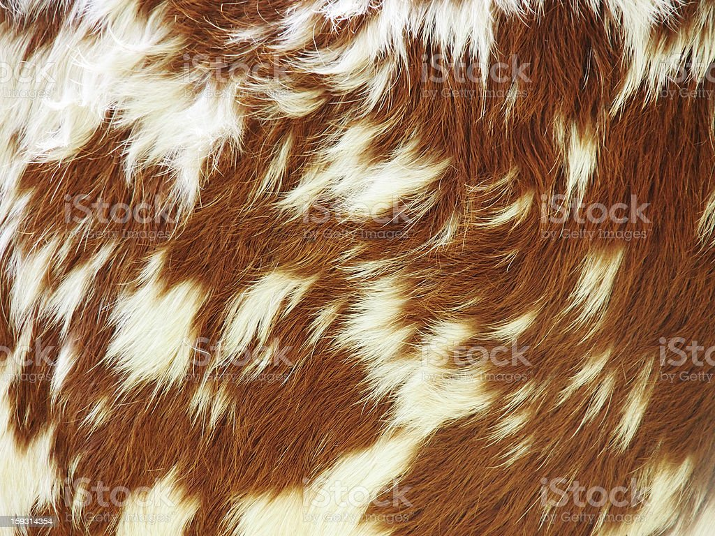 cow background, stock photo