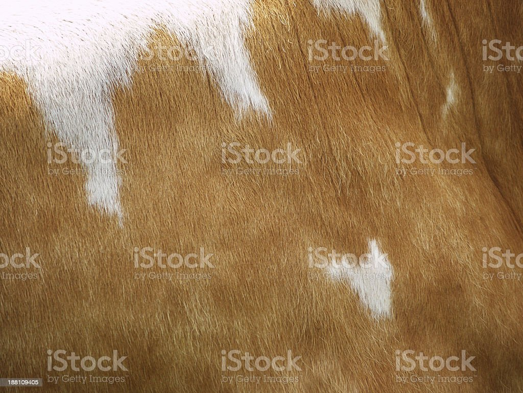 cow background with heart shape stock photo