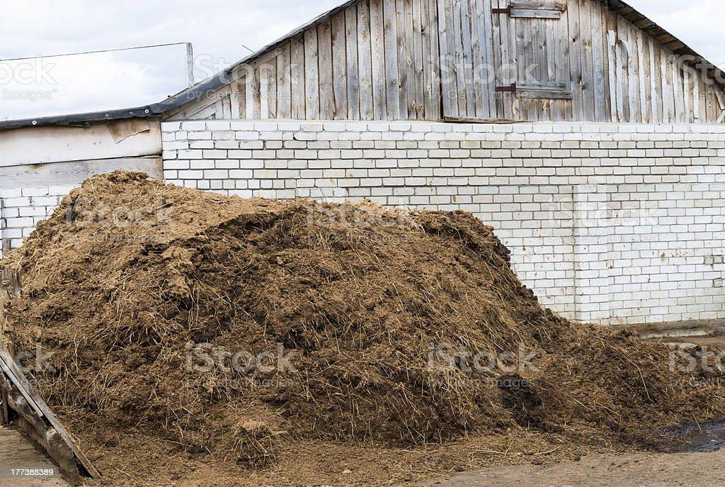 Cow dung as a natural fertilizer stock photo
