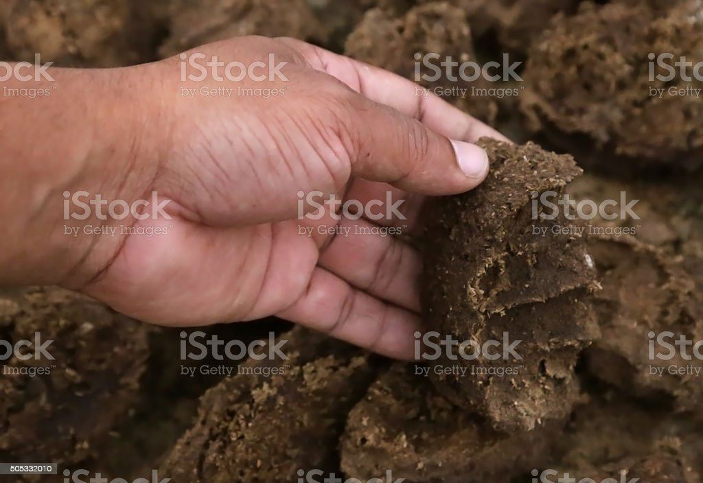 Cow dung as bio fuel stock photo