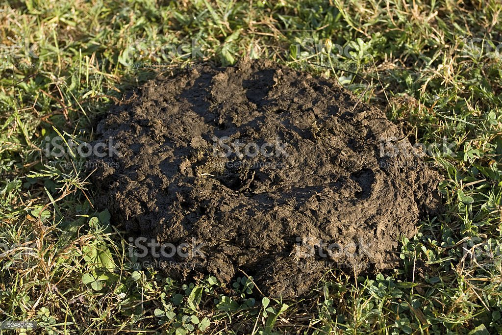 cow dung on grass royalty-free stock photo