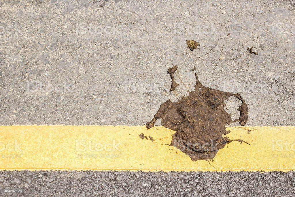 cow dung on the floor stock photo