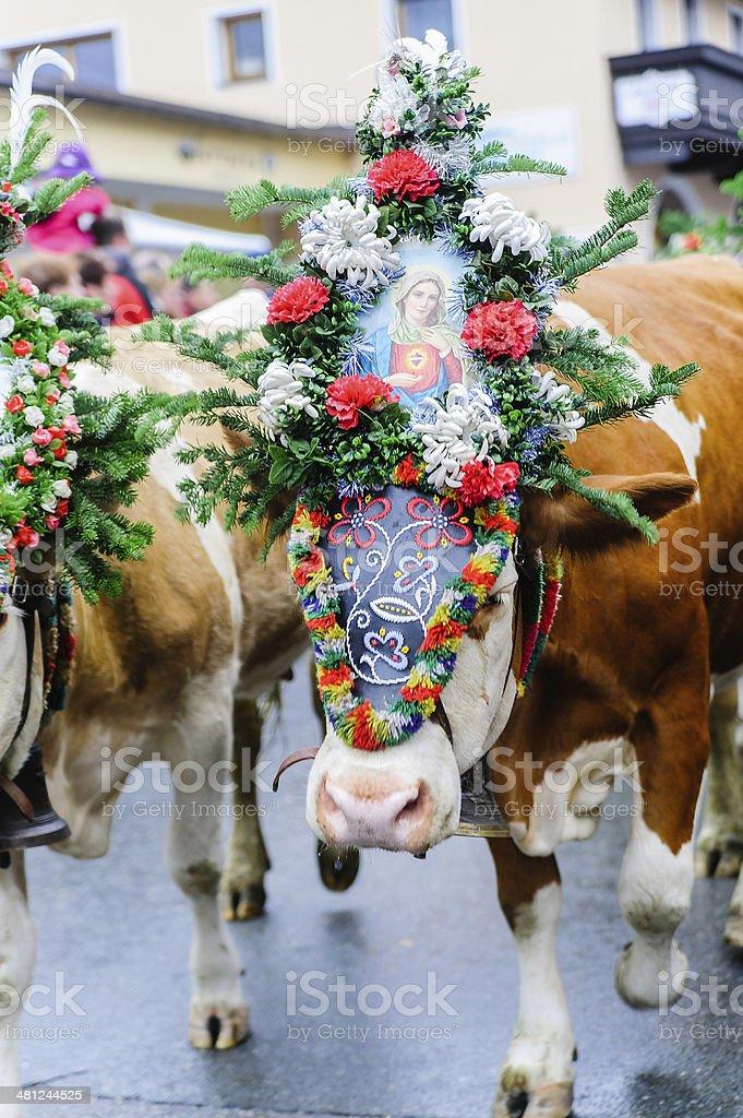 Cow Festival in Österreich – Foto