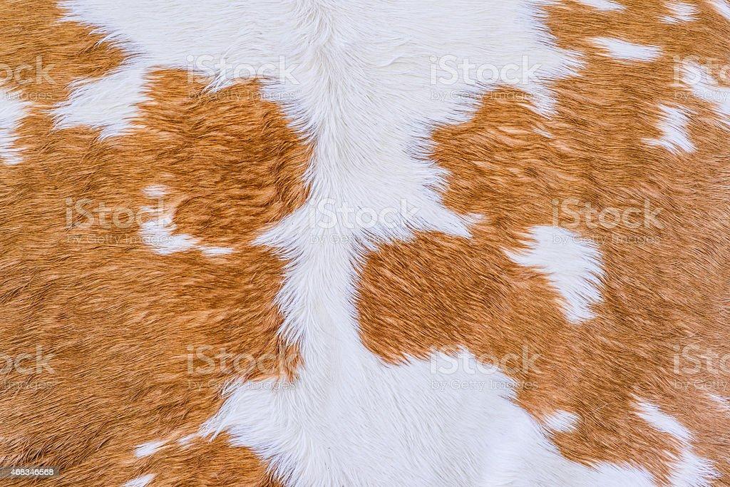 Cow fur (skin) texture. royalty-free stock photo
