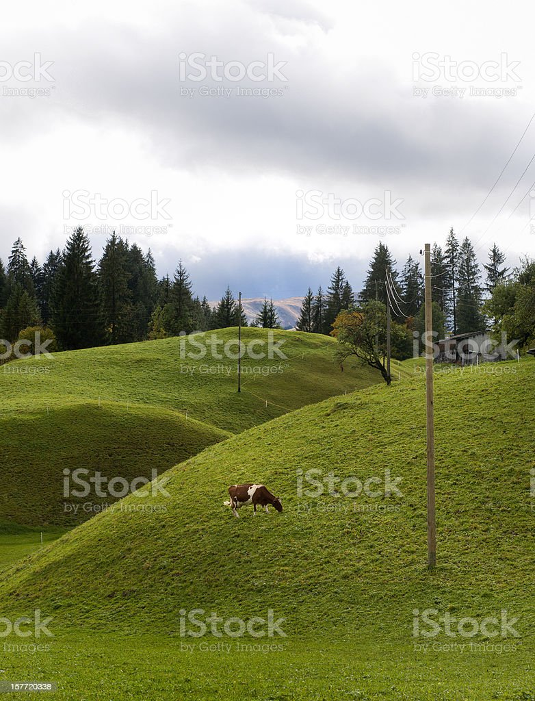 cow grazing on alp royalty-free stock photo