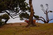 istock Cow hiding behind tree 1264326306