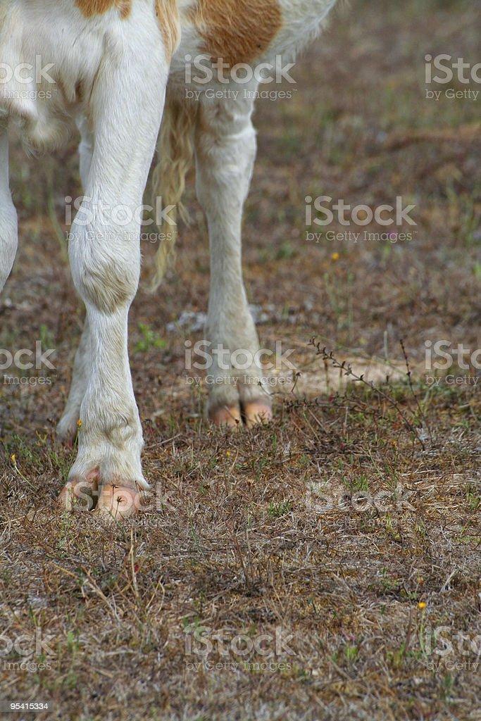 "Cow hoof"" Lizenzfreies stock-foto"