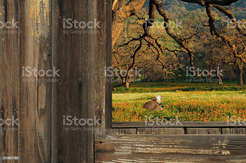 Cow in a meadow. stock photo