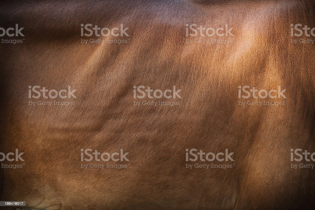 Cow leather. royalty-free stock photo