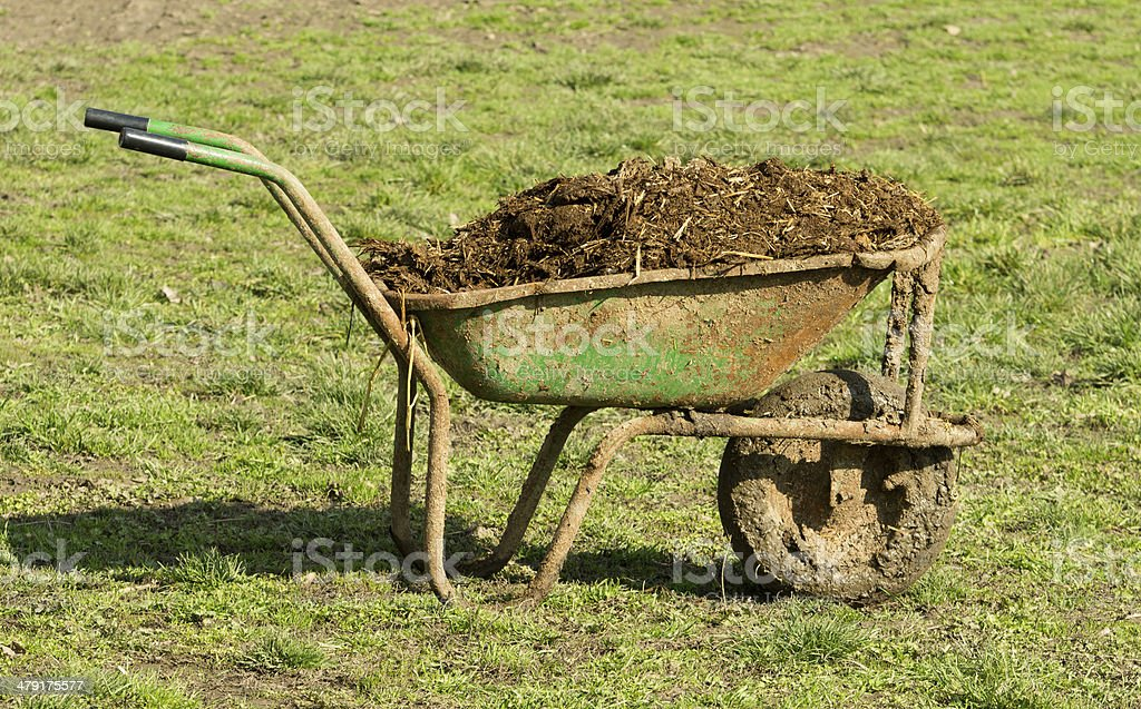 Cow manure in carts stock photo