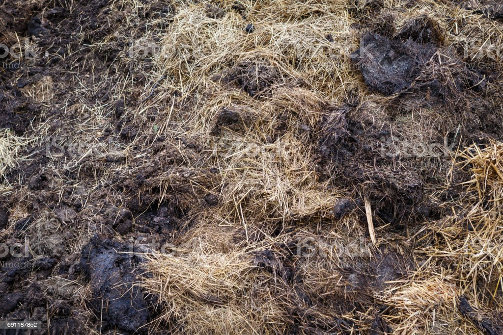 Cow manure mixed with hay stock photo