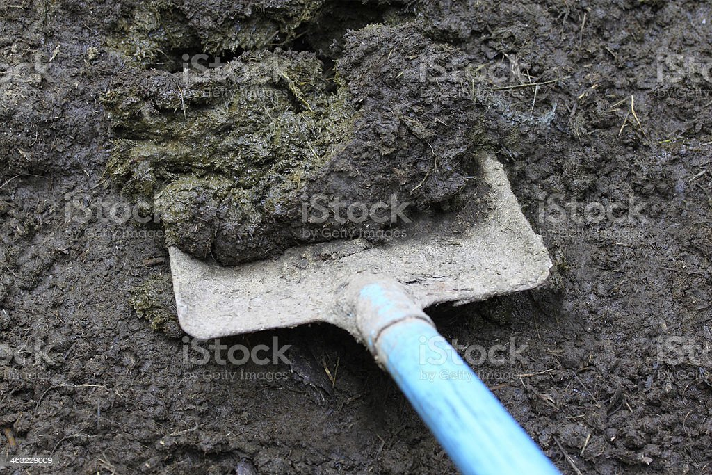 Cow manure stock photo