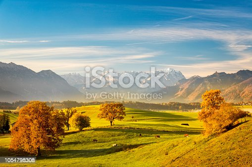 istock Cow on pasture  - Indian Summer at Murnauer Moos with Zugspitze in Background 1054798308