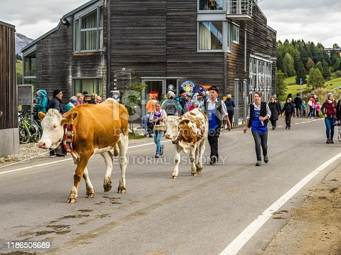 Alpe di Siusi, Itlay - October 05 2019: The cow parade in Italian Alps