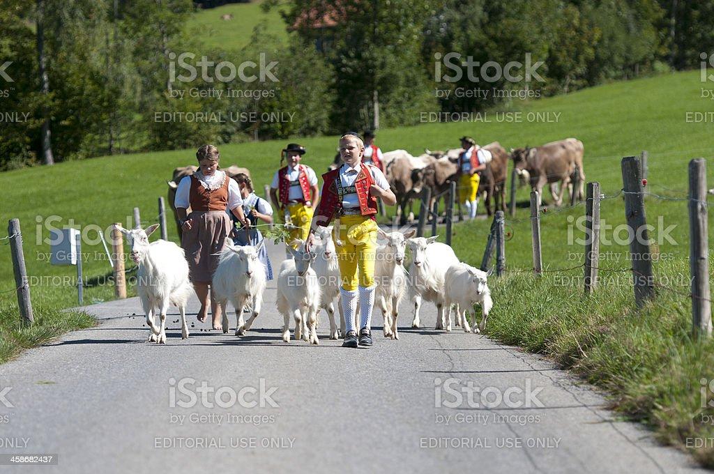 Cow-parade – Foto