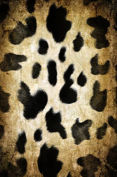 cow-muster - giraffen tattoos stock-fotos und bilder