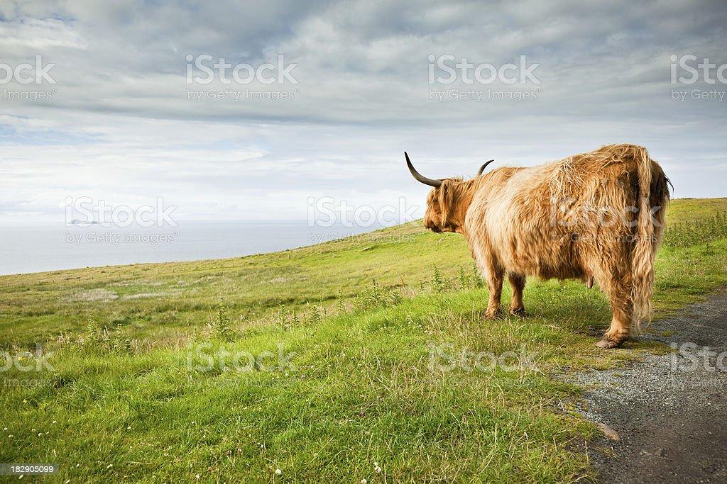 De vache - Photo