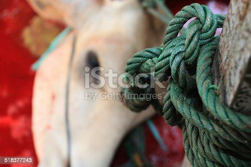 istock cow Qurban, Eid al-Adha 518377243