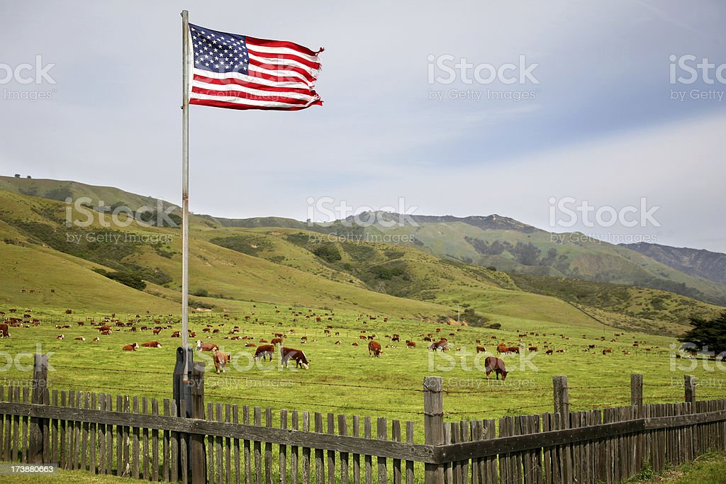 Cow Ranch with American Flag stock photo
