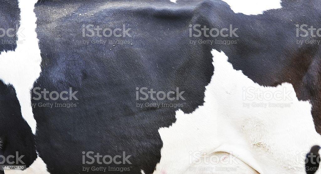 Cow Seite – Foto
