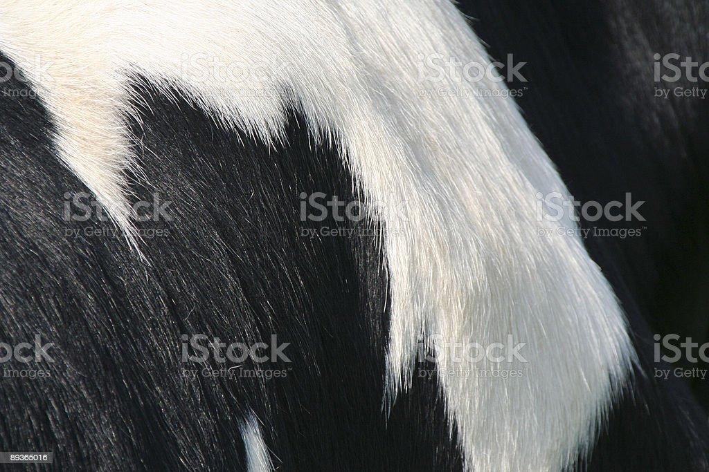 Peau de vache/fourrure#1 photo libre de droits