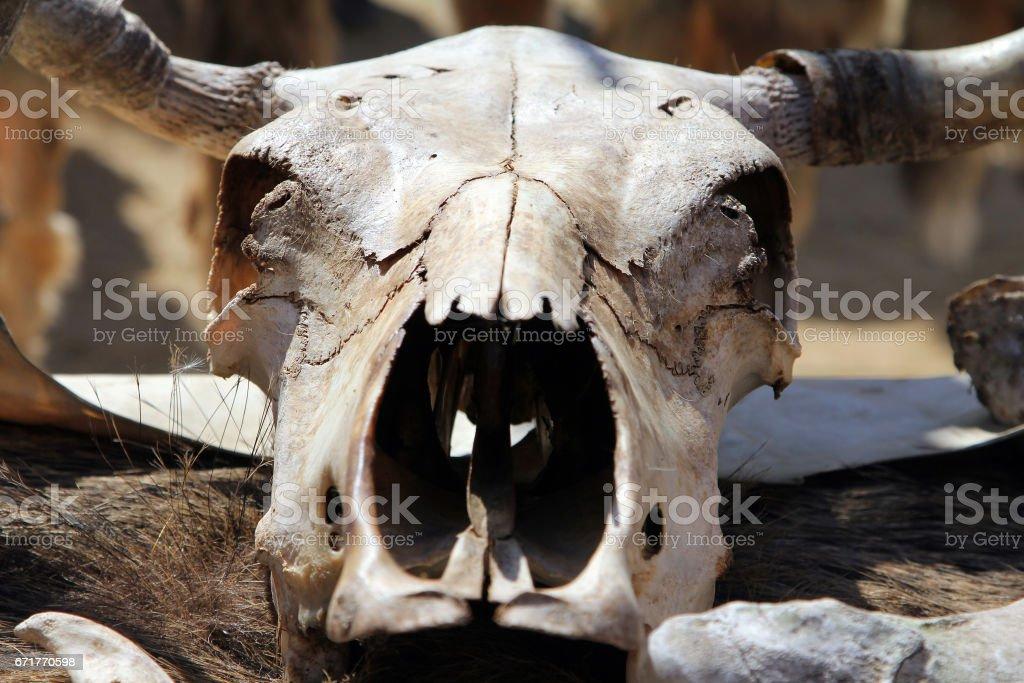 Cow skull at fair of artisans stock photo