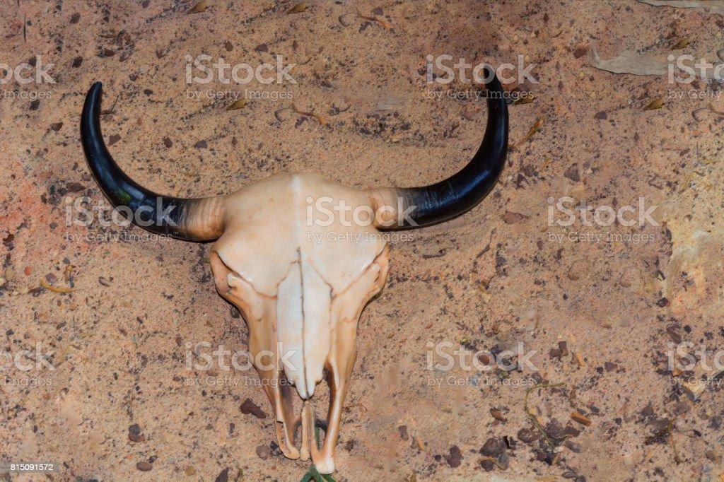 Kuhschädel Im Sand Stock-Fotografie und mehr Bilder von Aas | iStock