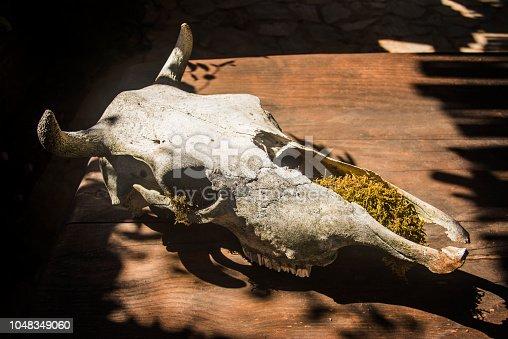 1151385192istockphoto cow skull on a wooden backround 1048349060