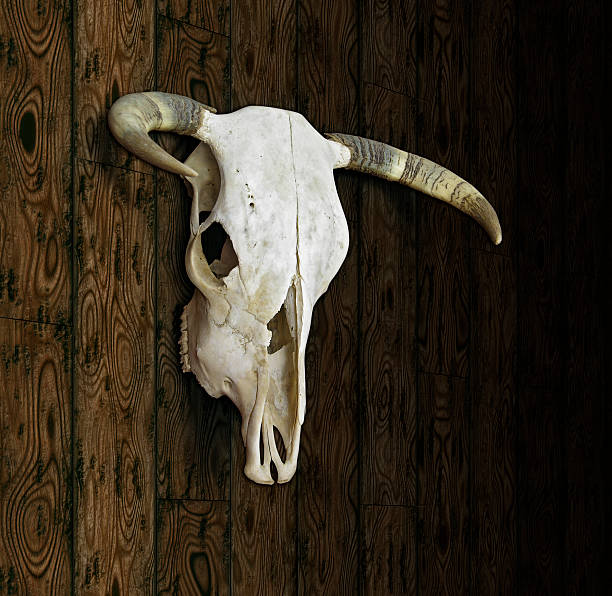 Download Best Cow Skull Stock Photos, Pictures & Royalty-Free ...