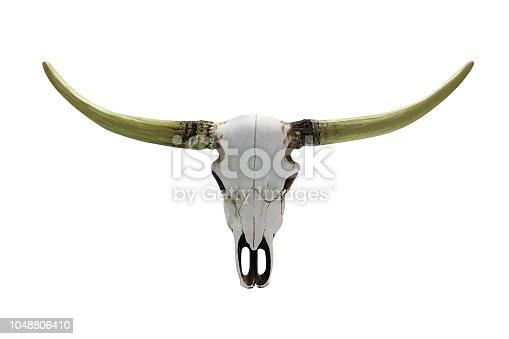 1151385192istockphoto cow skull with horns isolated on white background 1048806410