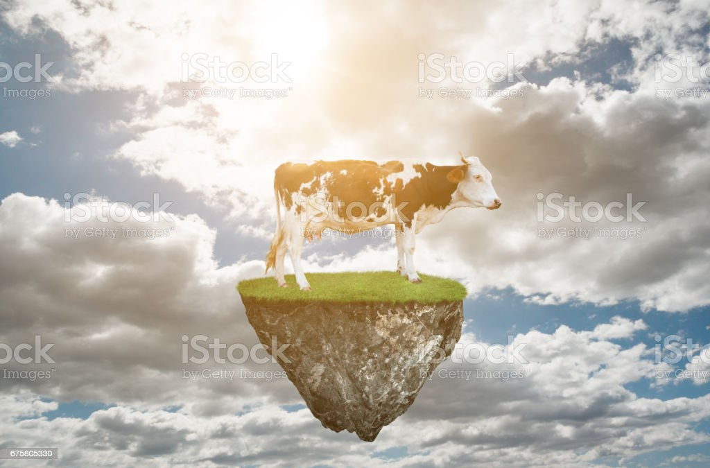 Cow standing flying stone stock photo