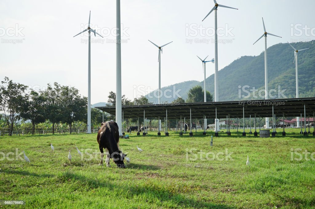 Cow standing on the meadow and wind turbine with Mountain Background. stock photo