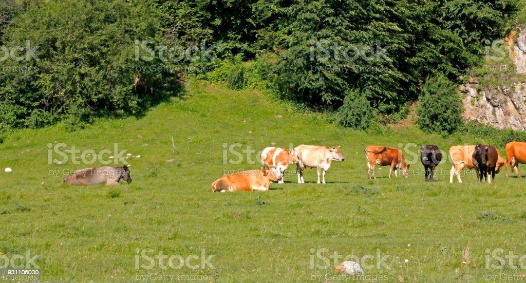 Yaz çayır üzerinde duran bir inek - Royalty-free Aydınlık Stok görsel