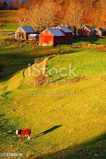 488912426istockphoto A cow stands in a field in late fall 1151063016