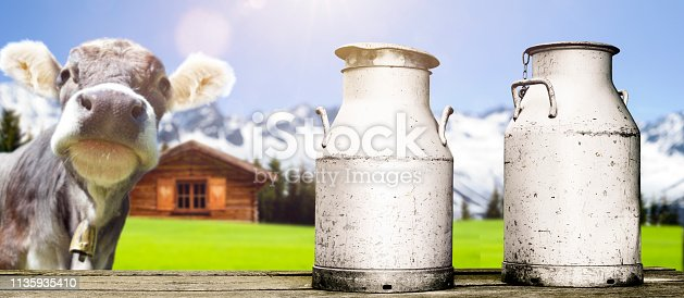 cow with milk cans