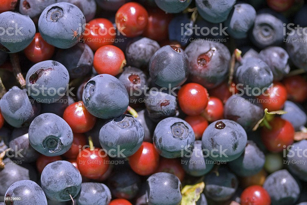 Cowberries and blueberries royalty-free stock photo