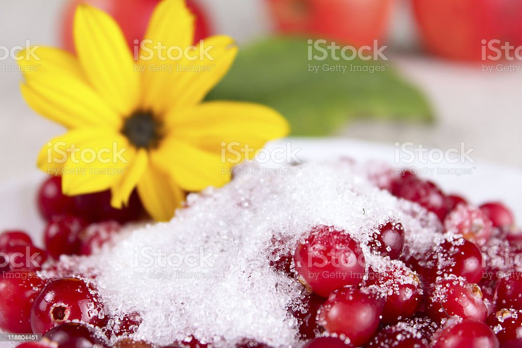 Cowberry in sugar against a yellow flower royalty-free stock photo