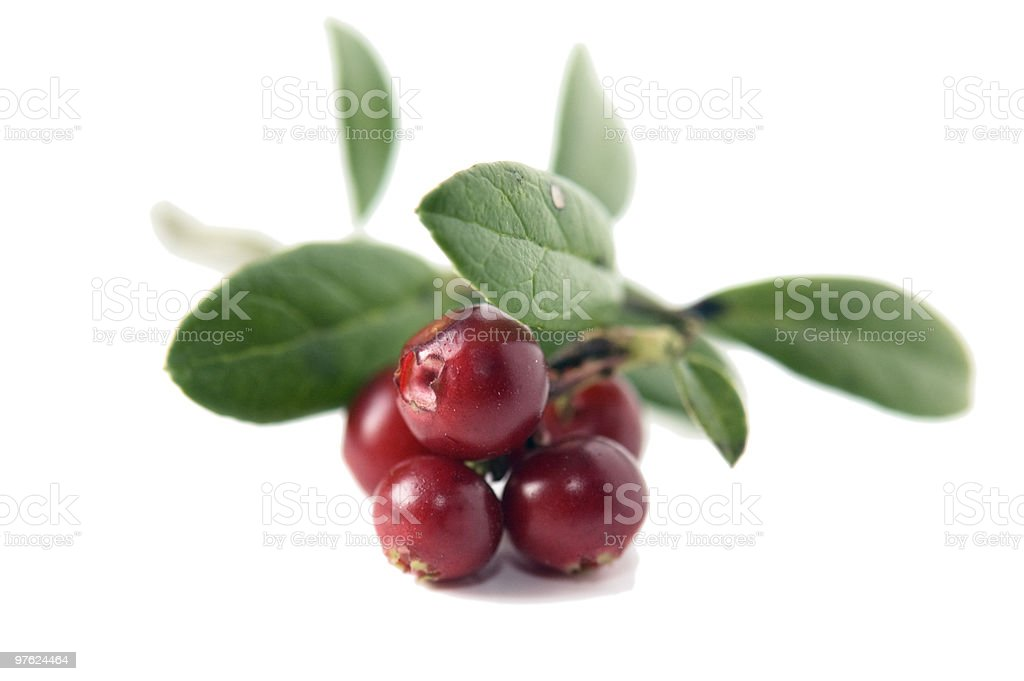 Cowberry isolated on white royalty-free stock photo