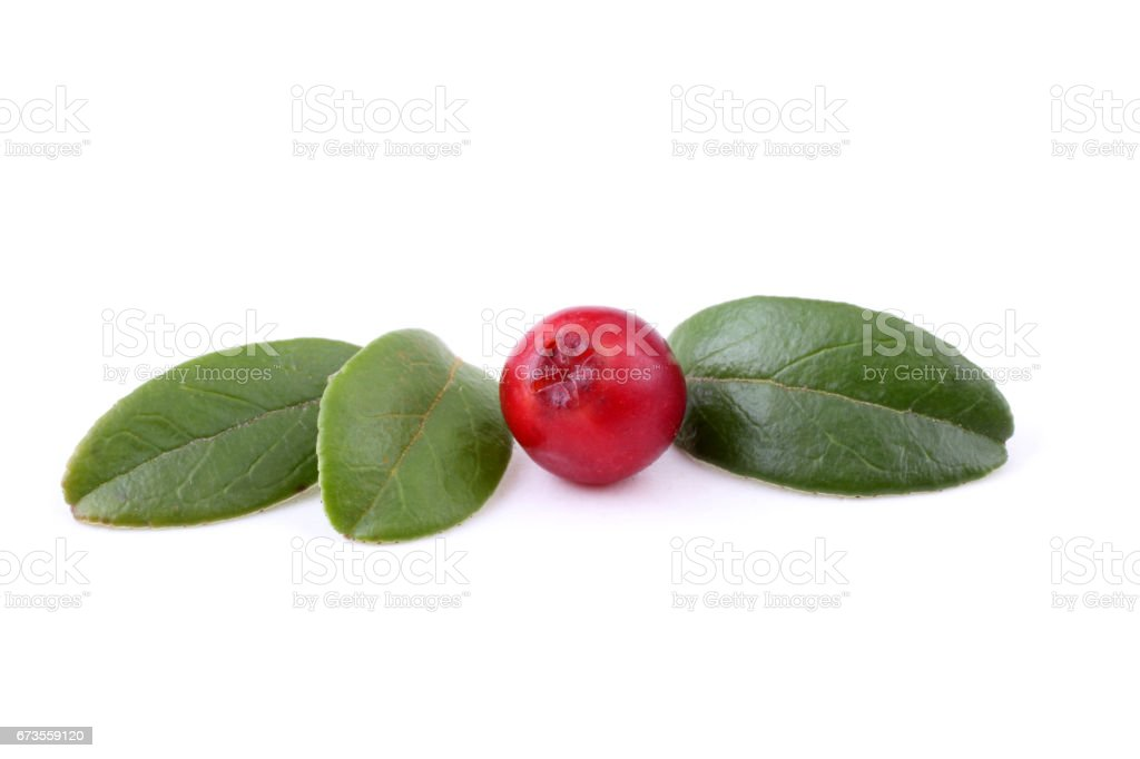 Cowberry royalty-free stock photo