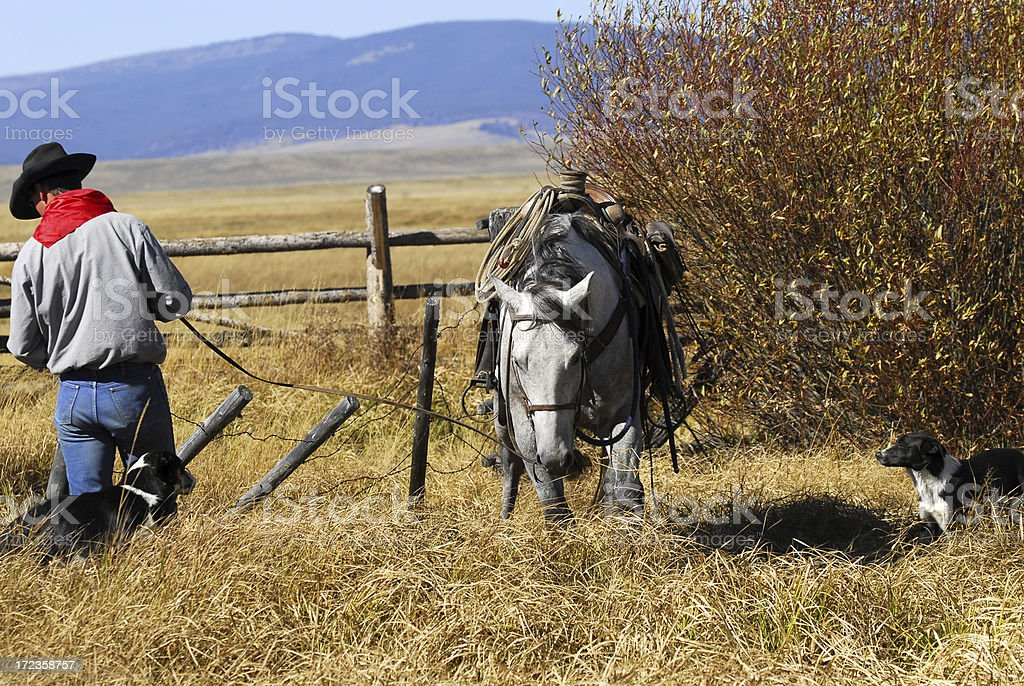 Cowboy at the Gate royalty-free stock photo