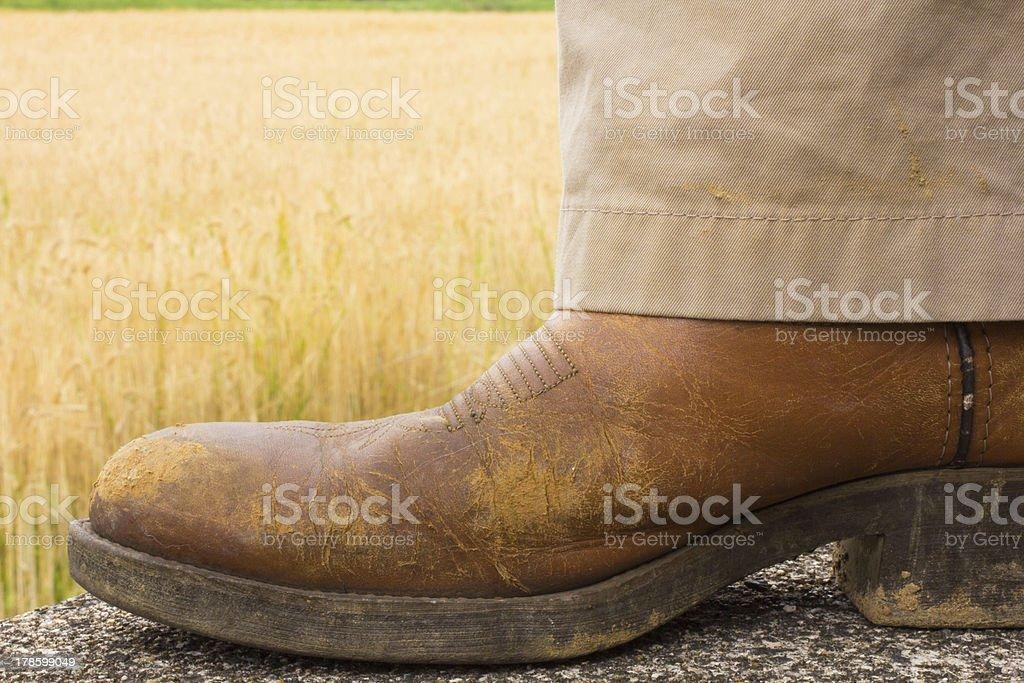 Cowboy Boot, Wheat Field stock photo